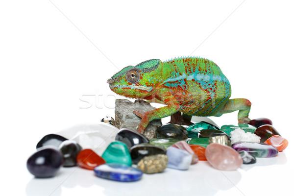 Canlı bukalemun sürüngen taşlar bo Stok fotoğraf © svetography