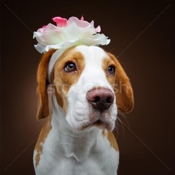 Stockfoto: Mooie · beagle · hond · bloem · meisje · bruin