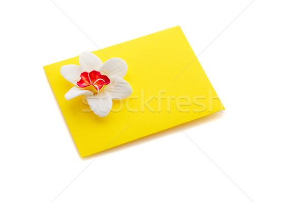 желтый конверт цветок выстрел Сток-фото © svetography