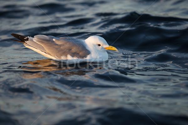 bird on sea water Stock photo © svetography