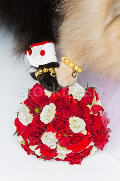 Kutya esküvő pár mancsok virágcsokor arany Stock fotó © svetography