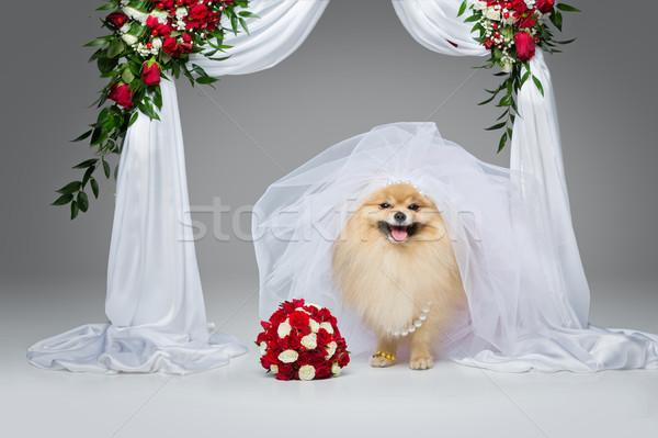 beautiful spitz bride under flower arch Stock photo © svetography