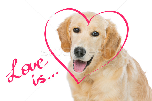 Jonge golden retriever hond vergadering hartvorm tekening Stockfoto © svetography