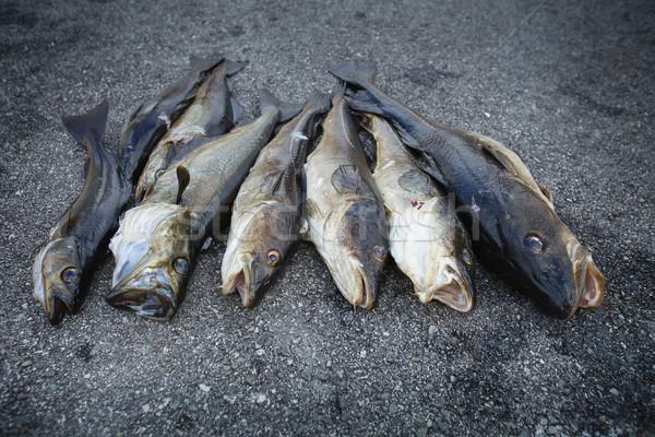 新鮮な ノルウェーの 魚 屋外 ストックフォト © svetography