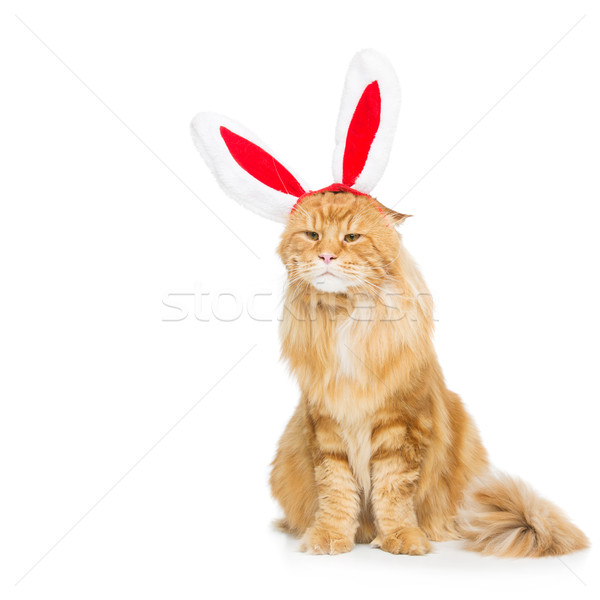 Big ginger cat in christmas rabbit ears head rim Stock photo © svetography