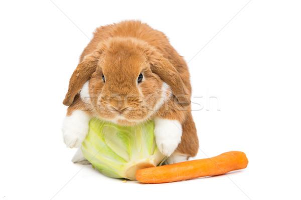 Güzel iç tavşan çok güzel kırmızı havuç Stok fotoğraf © svetography