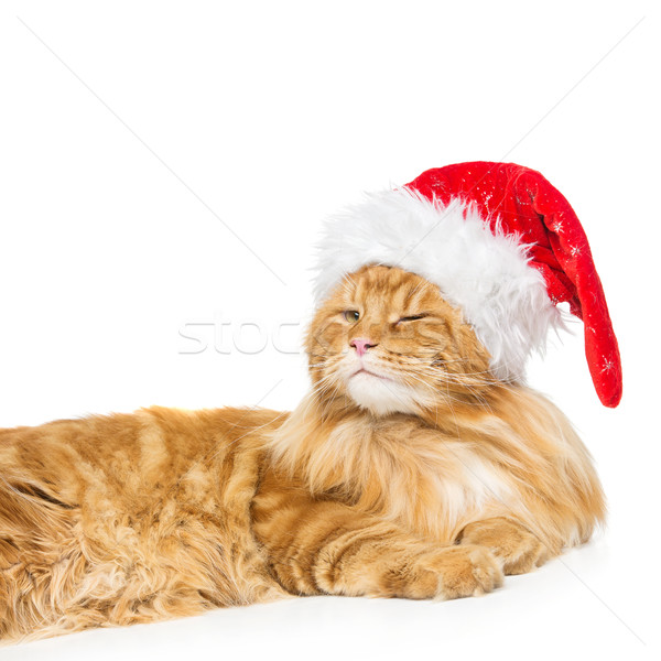 Big ginger cat in christmas hat Stock photo © svetography