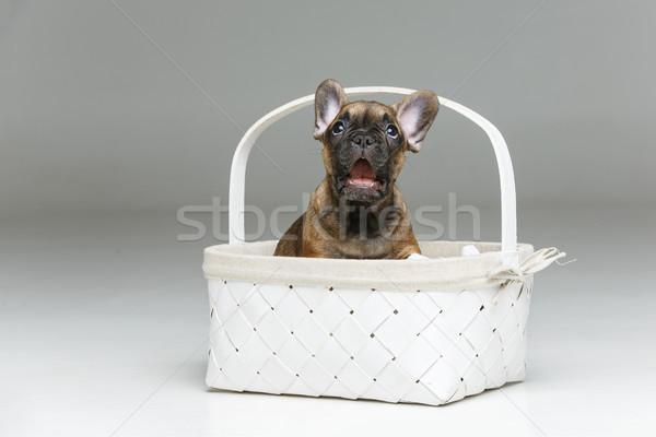かわいい フランス語 ブルドッグ 子犬 バスケット 美しい ストックフォト © svetography