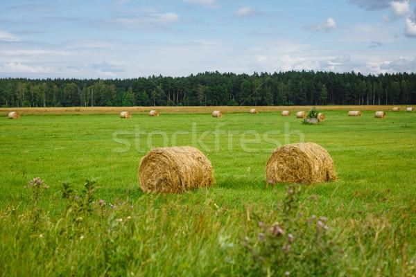 Verde prado feno forrest ao ar livre Foto stock © svetography