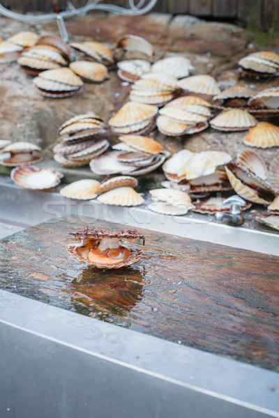 Stock photo: opened scallop shellop with mollusk inside