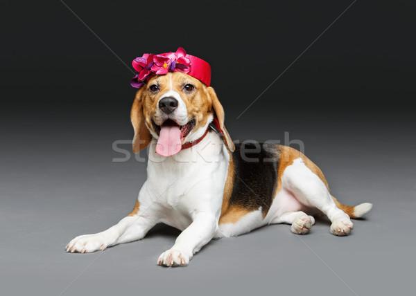 Stockfoto: Mooie · beagle · hond · roze · hoed · meisje