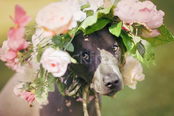 Thai kutya virág koszorú gyönyörű fiatal Stock fotó © svetography