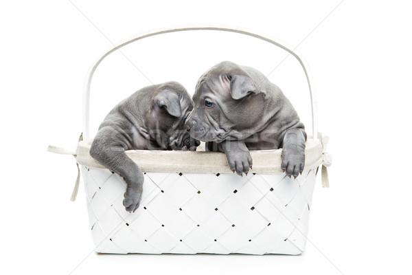 2 タイ 子犬 バスケット 孤立した 白 ストックフォト © svetography