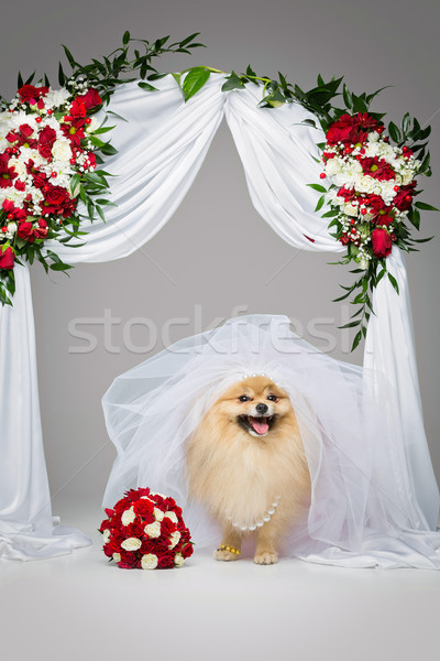 красивой невеста цветок арки собака юбка Сток-фото © svetography