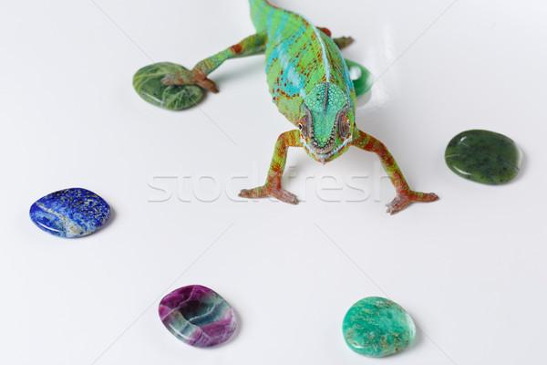 Levend kameleon reptiel stenen exemplaar ruimte Stockfoto © svetography