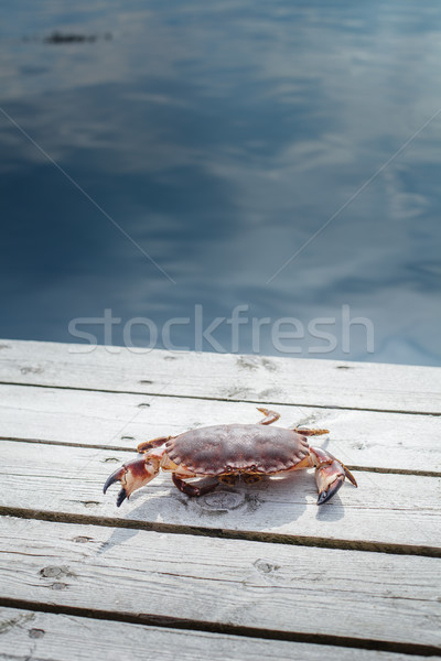 alive crab standing on wooden floor Stock photo © svetography