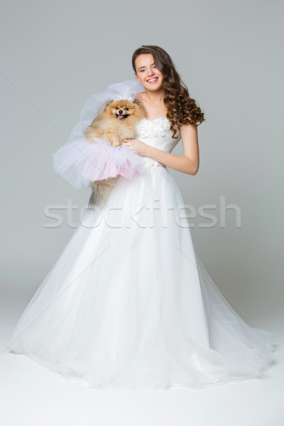 beautiful bride girl with spitz bride on gray background Stock photo © svetography