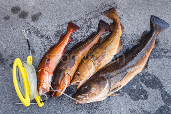 fresh Norwegian fish Stock photo © svetography