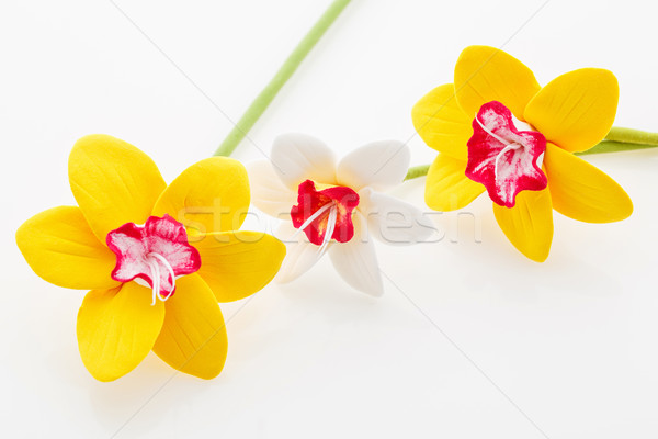 Beautiful narcissus flowers Stock photo © svetography