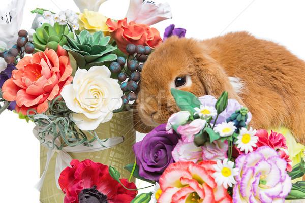Güzel iç tavşan çok güzel kırmızı çiçekler Stok fotoğraf © svetography