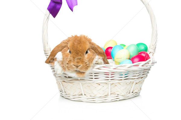 Beautiful domestic rabbit in basket with eggs Stock photo © svetography