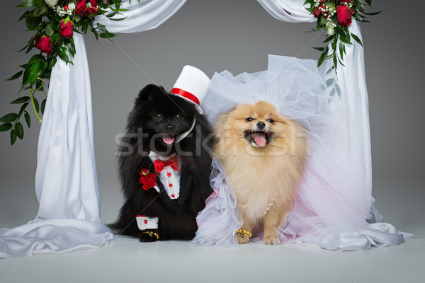 dog wedding couple under flower arch Stock photo © svetography