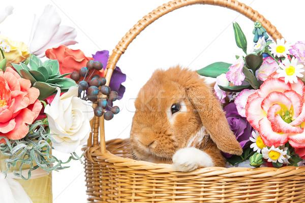 Güzel iç tavşan çok güzel kırmızı sepet Stok fotoğraf © svetography