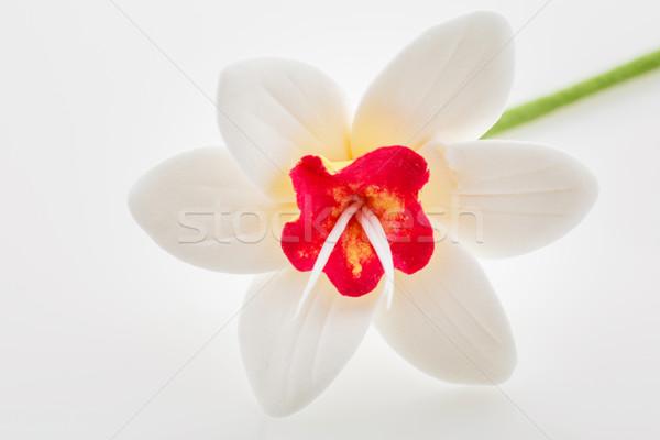 Beautiful white narcissus Stock photo © svetography