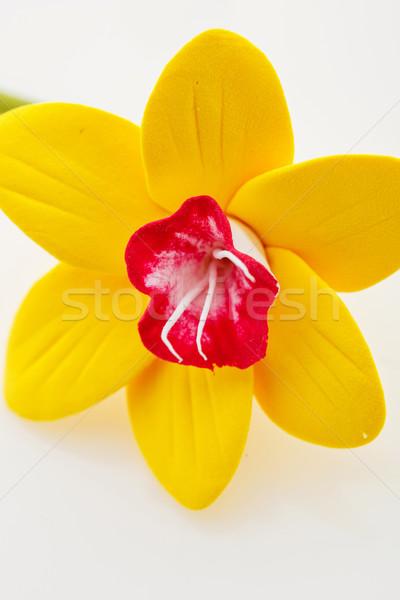 Beautiful yellow narcissus Stock photo © svetography