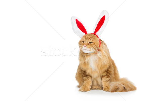 Big ginger cat in christmas rabbit ears head rim Stock photo © svetography