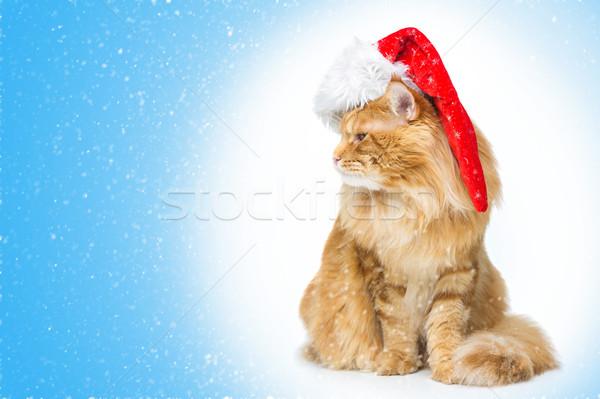 Nagy gyömbér macska mikulás sapka néz Stock fotó © svetography