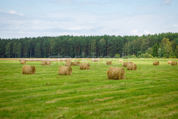 green meadow with hay rolls Stock photo © svetography
