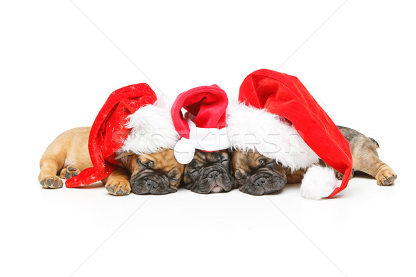 Kiskutyák alszik karácsony sapkák gyönyörű francia Stock fotó © svetography