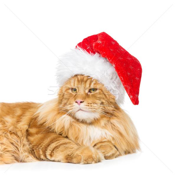 Groot gember kat christmas hoed Maine Stockfoto © svetography
