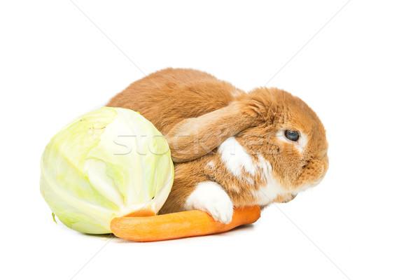 Stok fotoğraf: Güzel · iç · tavşan · çok · güzel · kırmızı · havuç