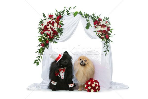 Kutya esküvő pár virág ív gyönyörű Stock fotó © svetography