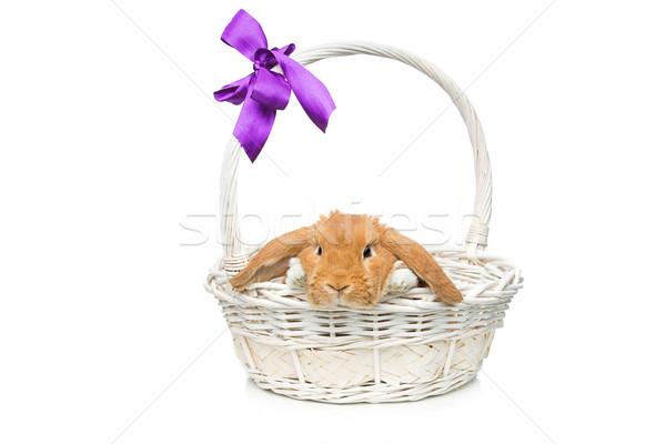 Mooie huiselijk konijn mand aanbiddelijk Rood Stockfoto © svetography