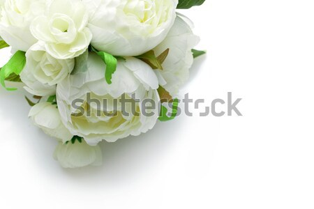 Stock photo: peony flowers isolated on white