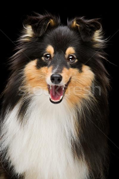 Stok fotoğraf: Köpek · portre · güzel · gülen