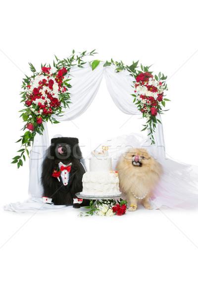 犬 結婚式 カップル 花 アーチ 美しい ストックフォト © svetography