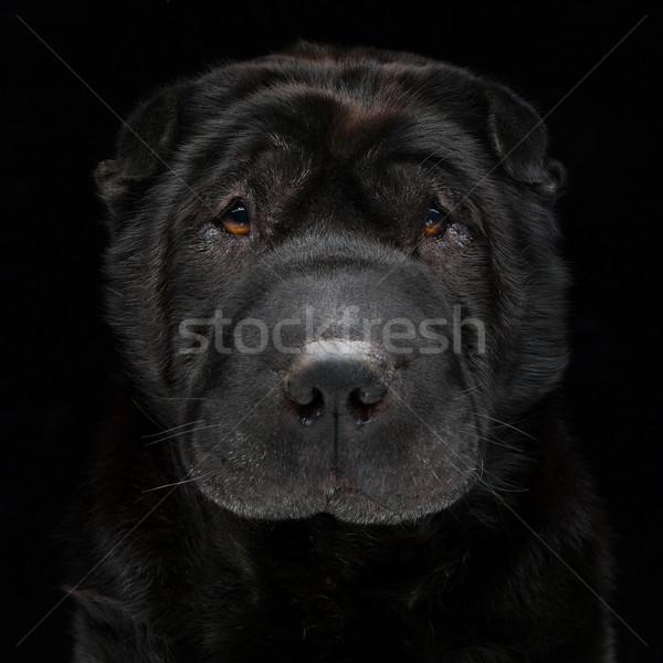 Siyah portre güzel yetişkin Stok fotoğraf © svetography