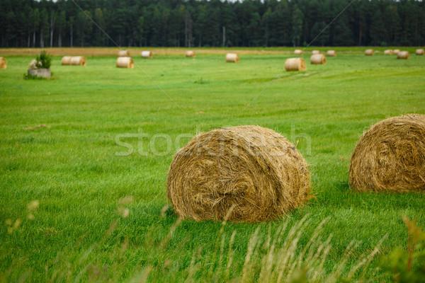 зеленый луговой сено Форрест Открытый Сток-фото © svetography