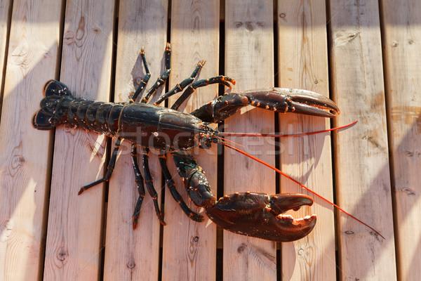 Fresche aragosta fuori shot copia spazio alimentare Foto d'archivio © svetography