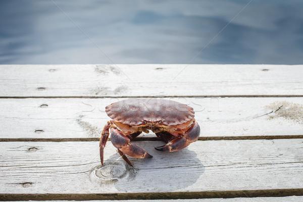 Vivo caranguejo em pé ao ar livre tiro Foto stock © svetography