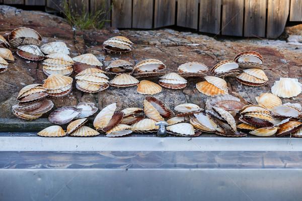 Viele Muscheln Waschbecken leer groß Metall Stock foto © svetography