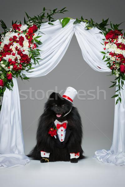 цветок арки красивый жених костюм красный Сток-фото © svetography