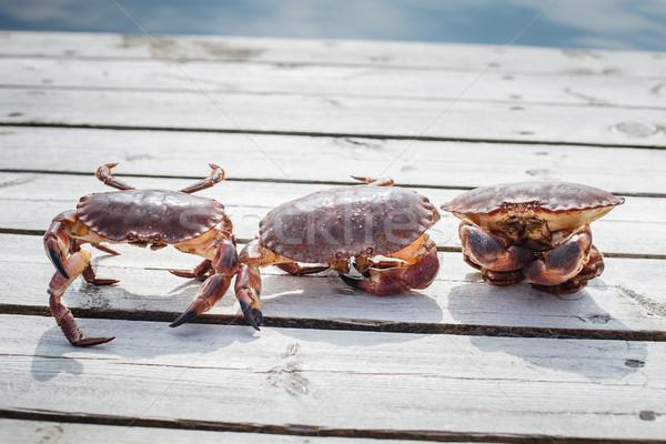 Três vivo em pé ao ar livre tiro Foto stock © svetography