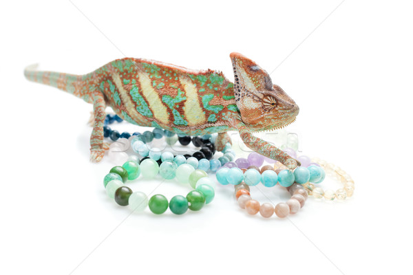 Beautiful chameleon with natural stone bracelets Stock photo © svetography