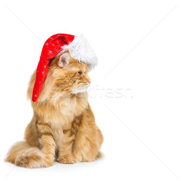 Grande jengibre gato Navidad sombrero Maine Foto stock © svetography