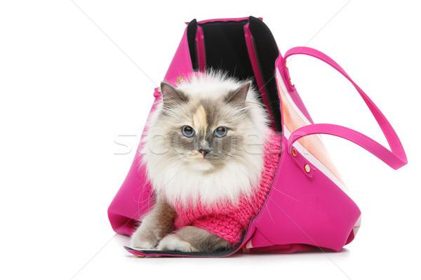 ストックフォト: 美しい · 猫 · ピンク · プルオーバー · 長い · 毛皮